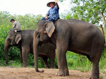 【日本語ガイドによる市内観光・ゾウ乗り体験/送迎付】ラオスの古都ルアンパバーン4日間