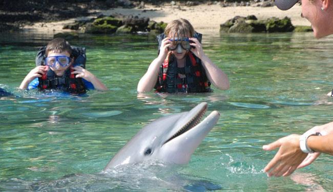 イルカと触れ合えるプログラム「ドルフィン・クエスト/別途」は大人気!/ヒルトンワイコロア/イメージ