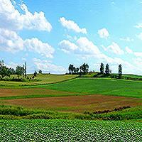 夏の美瑛の丘