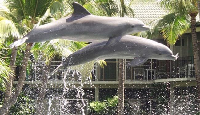 イルカたちと触れあうプログラム「ドルフィン・クエスト」(有料)も人気/カハラ/イメージ